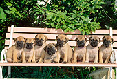 PUP 45 CE0008 01