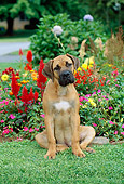PUP 45 CE0010 01