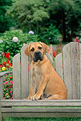 PUP 45 CE0011 01