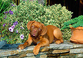 PUP 45 CE0012 01