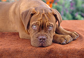 PUP 45 RC0001 01