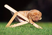 PUP 45 SS0001 01