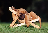 PUP 45 SS0002 01