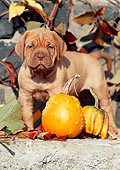 PUP 45 SS0003 01