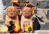 PUP 45 SS0004 01