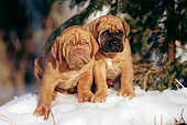 PUP 45 SS0005 01
