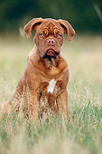 PUP 45 SS0006 01