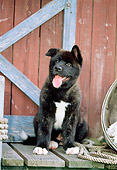 PUP 46 CE0001 01
