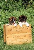 PUP 46 CE0003 01