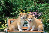 PUP 46 CE0007 01