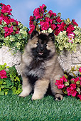 PUP 47 FA0001 01
