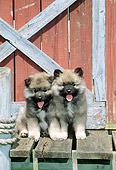 PUP 47 CE0003 01