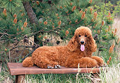 PUP 48 CE0010 01