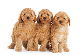 PUP 48 JE0002 01