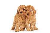 PUP 48 JE0003 01