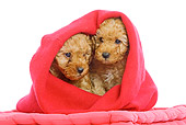 PUP 48 JE0008 01