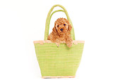 PUP 48 JE0011 01