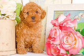 PUP 48 JE0015 01