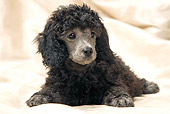 PUP 48 JE0019 01