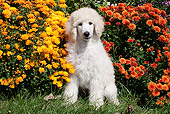 PUP 48 LS0001 01