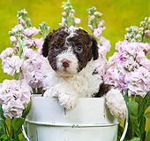 PUP 48 XA0002 01