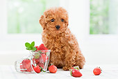PUP 48 YT0007 01