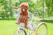 PUP 48 YT0009 01