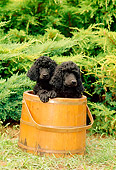 PUP 48 CE0001 01