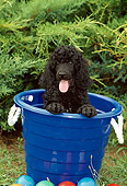 PUP 48 CE0003 01