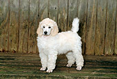 PUP 48 CE0006 01
