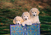 PUP 48 CE0008 01
