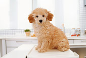 PUP 48 YT0003 01