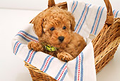 PUP 48 YT0004 01