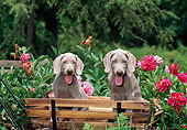 PUP 49 CE0004 01