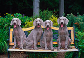 PUP 49 CE0001 01