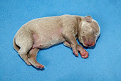 PUP 49 KH0002 01
