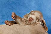PUP 49 KH0003 01