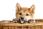 PUP 50 AC0001 01