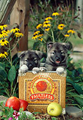 PUP 50 CE0001 01