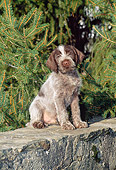 PUP 50 CE0005 01