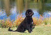 PUP 50 FA0006 01