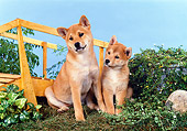 PUP 50 FA0007 01