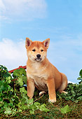 PUP 50 FA0008 01