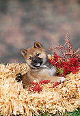 PUP 50 FA0009 01