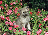 PUP 50 FA0012 01
