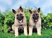 PUP 50 FA0013 01