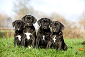 PUP 50 GL0002 01