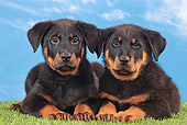 PUP 50 JE0004 01