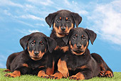 PUP 50 JE0005 01