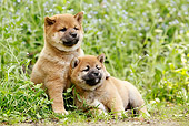 PUP 50 JE0014 01